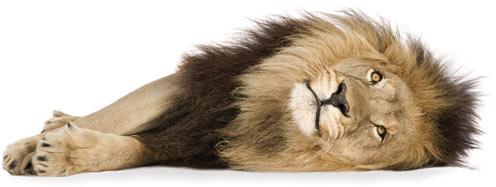 Löwe, liegend